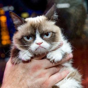 Grumpy cat wins €613.000,-