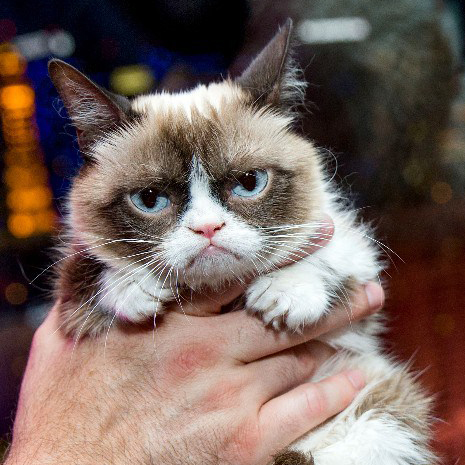 Image of: Movie Grumpy Cat Wins u20ac613000 The Independent Grumpy Cat Wins u20ac613000 Knijff Trademark Attorneys